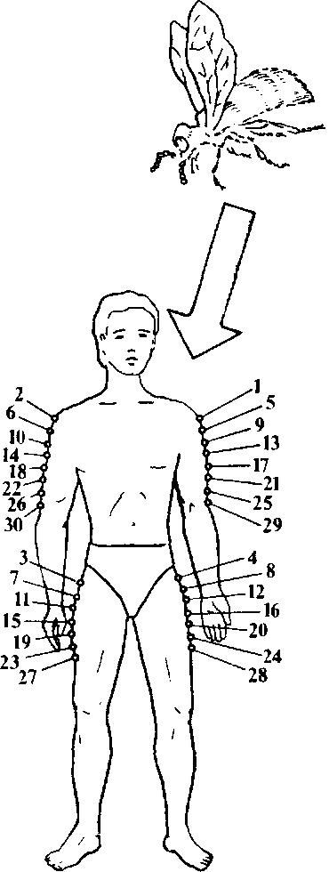 Апитерапия в домашних условиях точки